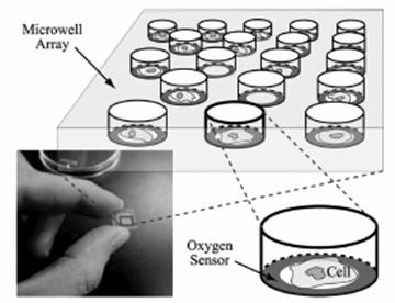 Polymer Deposition For Single Cell Sensors